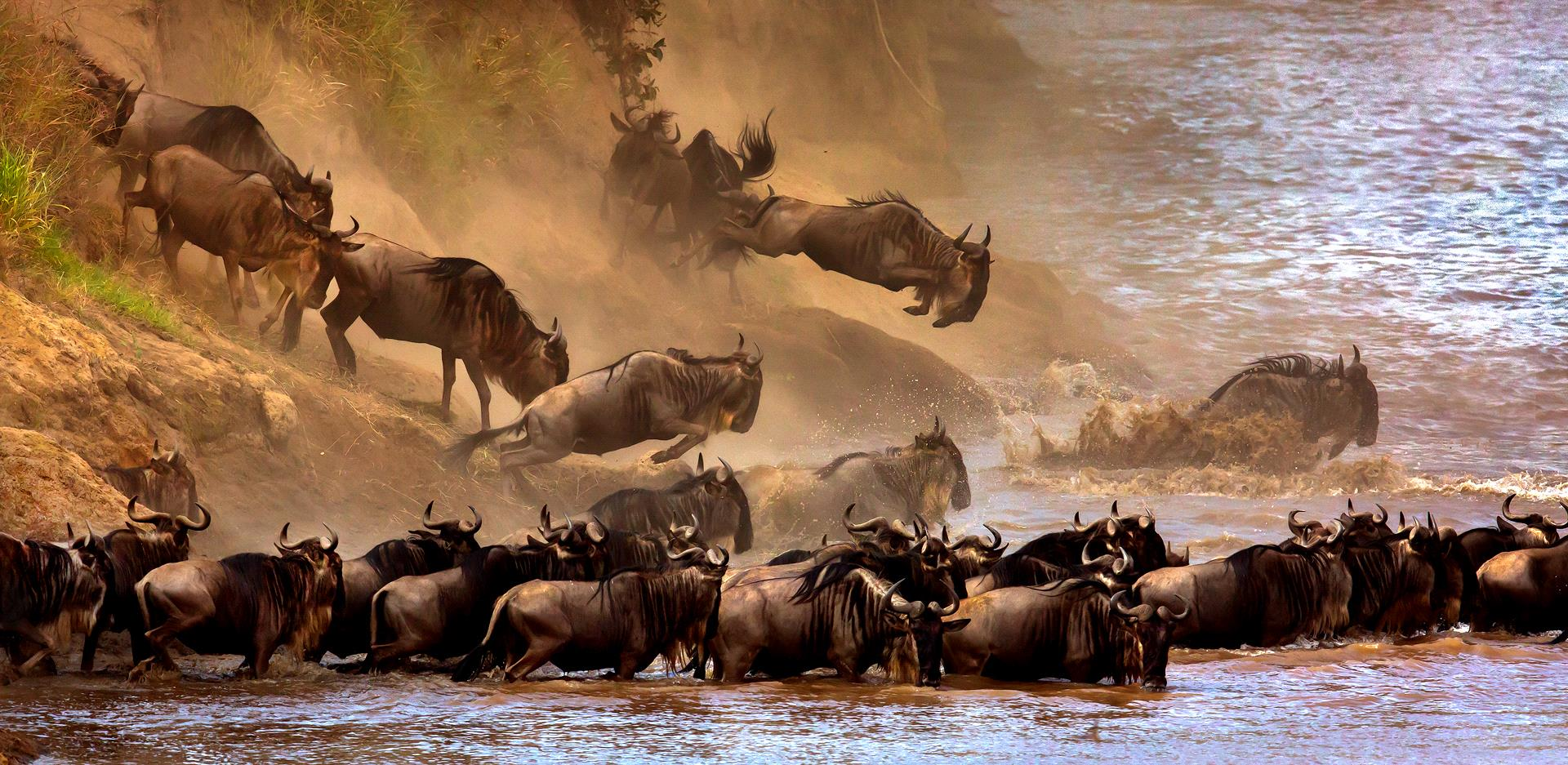 Certificate of Commendation - Sergey Agapov (Russian Federation) - Great Migration Of Wildebeest 2